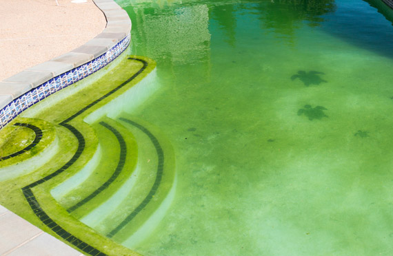 Possibili problematiche dell'acqua di piscina: l'acqua della vostra piscina è verde